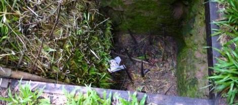 Trap door - Tiger trap